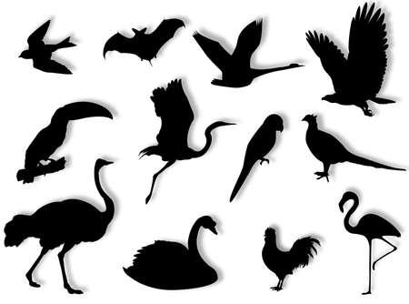 別の種を代表する鳥シルエット 写真素材