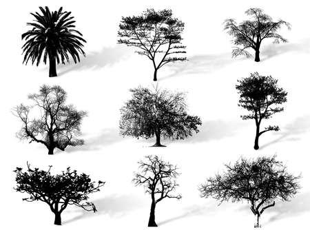 自然の中で種を代表する木のシルエット 写真素材