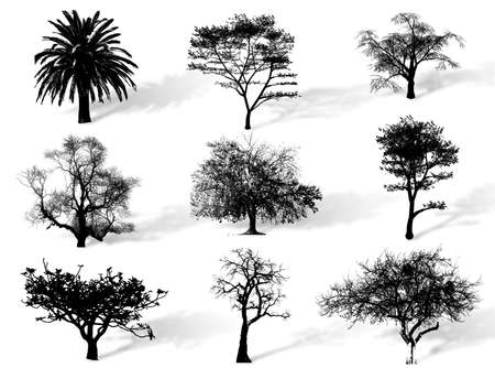 chlorophyll: Trees silhouettes to represent different species in nature