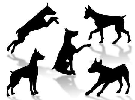 種類のポーズや態度で犬のシルエット 写真素材