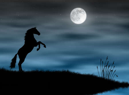 Wild horse silhouette in a blue moonlight