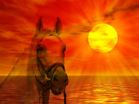 mammalian: Horse portrait on a colorful sunset landscape Stock Photo