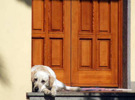 White dog in front of a houses door