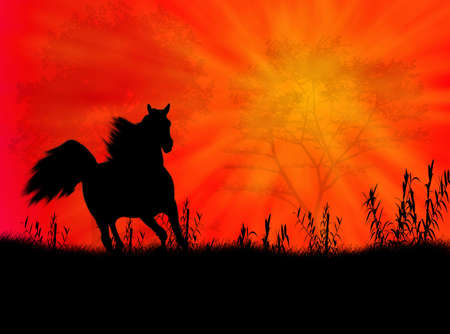Black wild horse against a colorful sunset photo