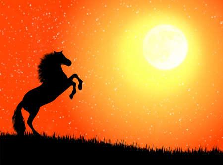月明かりのある晩に対して黒い野生馬 写真素材