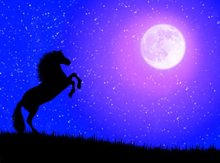 Black wild horse against a moonlight night Stock Photo - 3480689