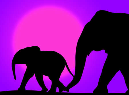Elephant and her baby walking on a colorful sunset photo