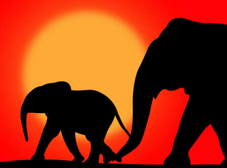 Elephant and her baby walking on a colorful sunset