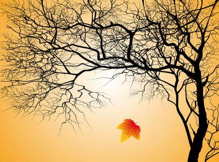 秋の背景に葉のない木