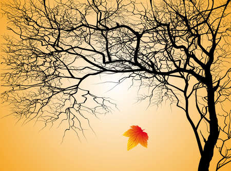 Tree without leaves on an autumn background