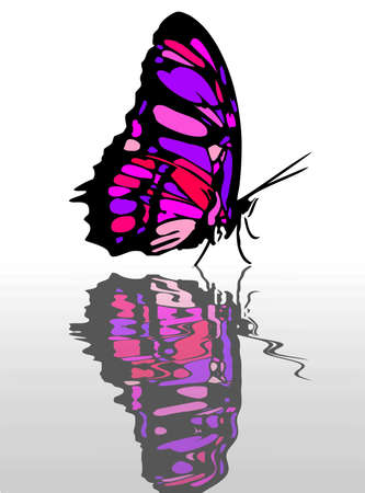 A very colorful butterfly as symbol of spring Stock Photo - 16195339
