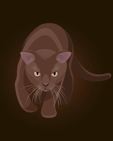 burmese: Vector illustration of a brown burmese cat