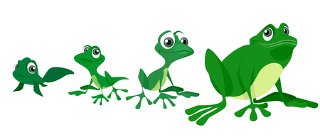 Vector illustration of the process of growing a frog Illustration