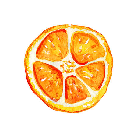 Watercolor isolated orange slice. Tropical refreshing exotic fruit on a white background. Summer concept.