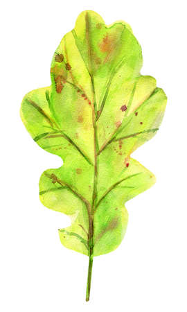 Watercolor autumn oak leaf. One fallen green leaf with yellow, orange, green, brown, ocher, red drops and splashes of color. Isolated object on white background. Element for design. Stockfoto