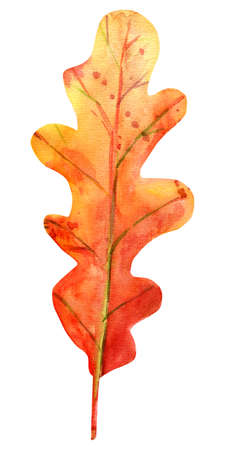 Watercolor autumn oak leaf. One fallen leaf of red-brown color with yellow, orange, green, brown, ocher, red drops and splashes of color. Isolated object on white background. Element for design. Stockfoto