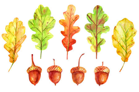 Watercolor autumn set with leaves and acorns. Four seeds of a tree of an oak red-brown color with a gold-ocher cup. 5 fallen leaves of yellow, green and orange color. Stockfoto