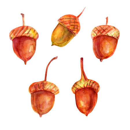 Watercolor illustration with acorns. The seeds of the tree are oak red-brown in color with a golden ocher cup. Five isolated objects on a white background. Stockfoto