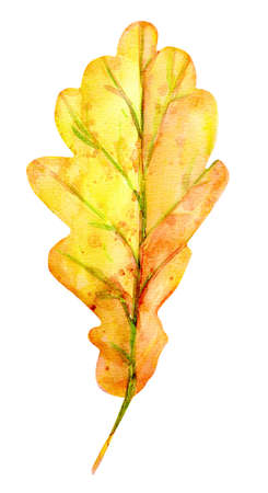 Watercolor autumn oak leaf. One yellow leaf with orange, green, brown, ocher, red drops and splashes of color. Isolated object on white background. Element for design. Stockfoto