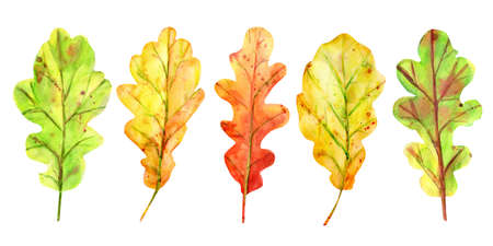 Watercolor autumn set with oak leaves. 5 fallen leaves of yellow, orange and green with drops and splashes. Isolated objects on white background. Elements for design. Stockfoto