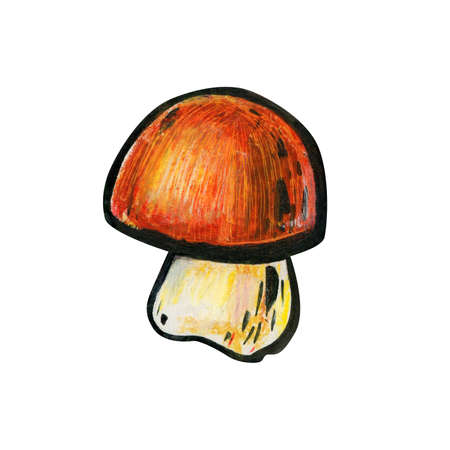 One mushroom close up. Autumn concept. Cep or boletus. Mushroom with a red-brown hat and a white leg. Side view. Foto de archivo