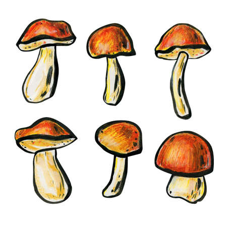 Set of six mushrooms. Autumn concept. Porcini mushrooms, boletus and cap boletus close up. Mushrooms with red-brown hats and white legs. Side view.
