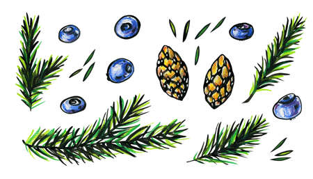 Pine branches, cones, needles and blueberries. Autumn concept. Bright, contrast, graphic illustration with forest elements isolated on a white background. Stok Fotoğraf