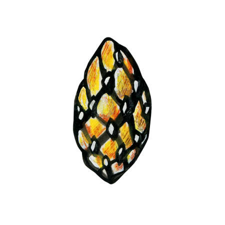 Young pine cone or spruce. Christmas design element. Isolated on a white background. Bright graphic illustration. Stok Fotoğraf