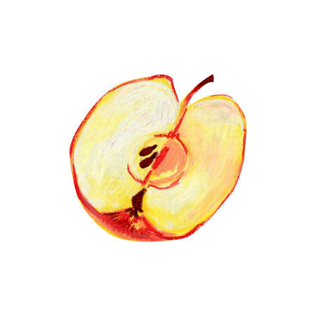 Half a red apple isolated on a white background. A longitudinal section of a ripe fruit with pulp, seeds and a stalk. Hand-drawn oil pastel illustration for food label design. Eco product.