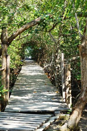 Hidden cenote