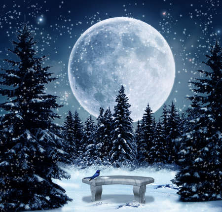winter wallpaper: Winter night with a big full moon
