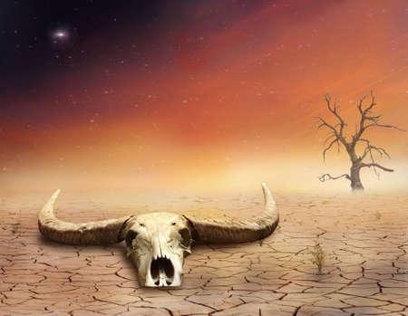 Bull skull in the desert