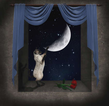 cat playing in a window with blue curtain at night Standard-Bild