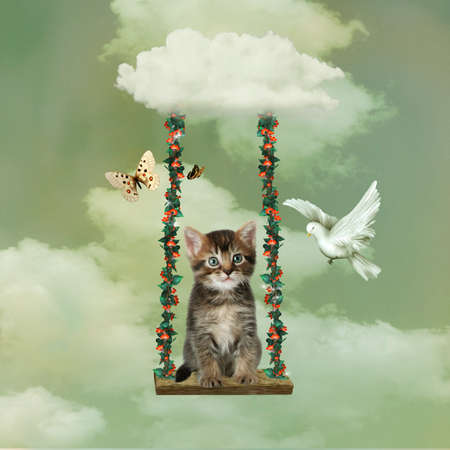 a cat in a hammock hanging of a cloud with a dove and butterfly photo