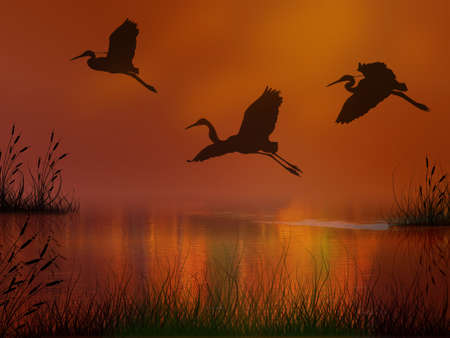 Three storks flying over the lake at the sunset Standard-Bild