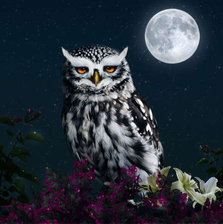 Photomanipulation of an owl at night with full moon
