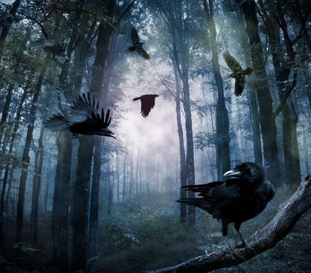 terror: black crows flying in the forest in the night