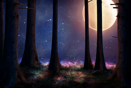 stars sky: tall trees of a forest illuminated with a big full moon