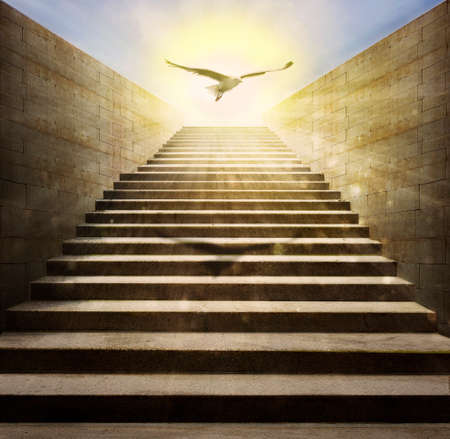 photomanipulation: in a brilliant day a bird is flying over a stair