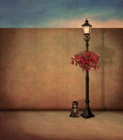 street lamp: Little cat and street lamp in the evening Stock Photo