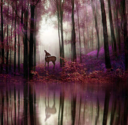 digital art: A little fawn in middle of a forest with water reflection