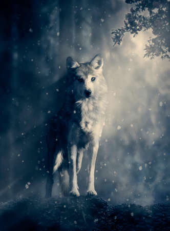 Wolf standing on a rock in the middle of the forest