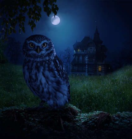Photomanipulation. Lonely owl in a field with a house in the background on a moonlit night