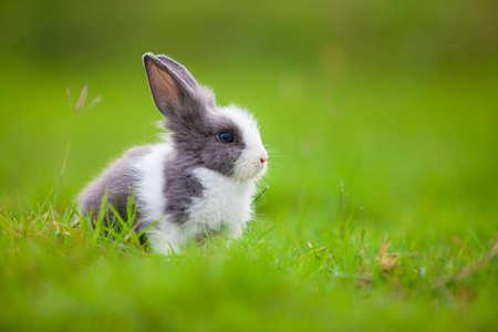 enano: conejo