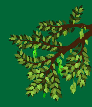 the mango and tree with big branch and element of leaf and many product. fruite and plant natural. vector illustration eps10.