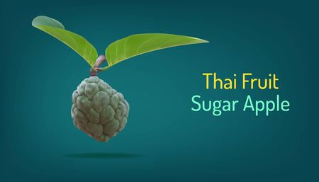 realistic custard apple or sugar apple or sweetsop and beuatiful leaf. thai annona healthy fruit. vector illustartion eps10  イラスト・ベクター素材