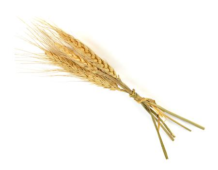 cebada: Ear of barley on white background