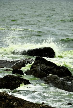 plancton: floración de plancton naturaleza agua verde