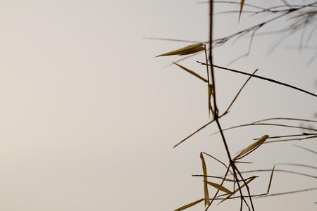 bough: wood tree stick on background