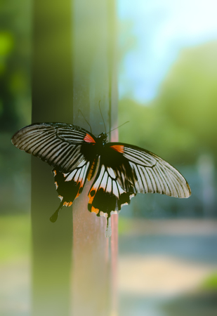 Butterfly need freedom on background